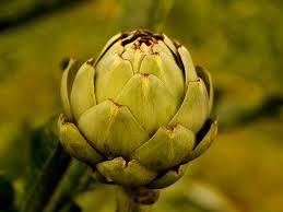 Quel est le nom de ce légume ?