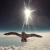 Laurent Lamarca, le clip dans l'espace pour Le Vol des Cygnes